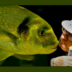 patatetende vis: een patatvis...