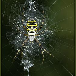 Wow een web met dauw!
