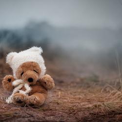 Teddy Beer in de mist