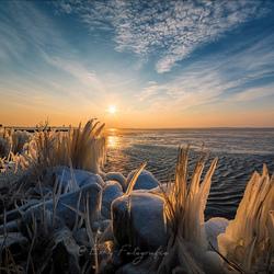 Bevroren riet