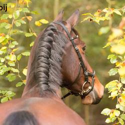 Paard in de herfst