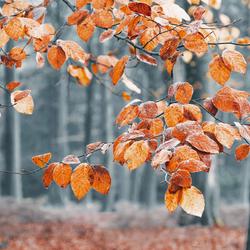 Autumn leaf decor