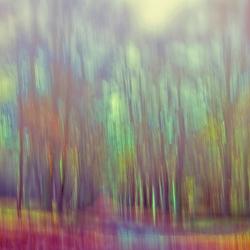 Kunst uit een Bos