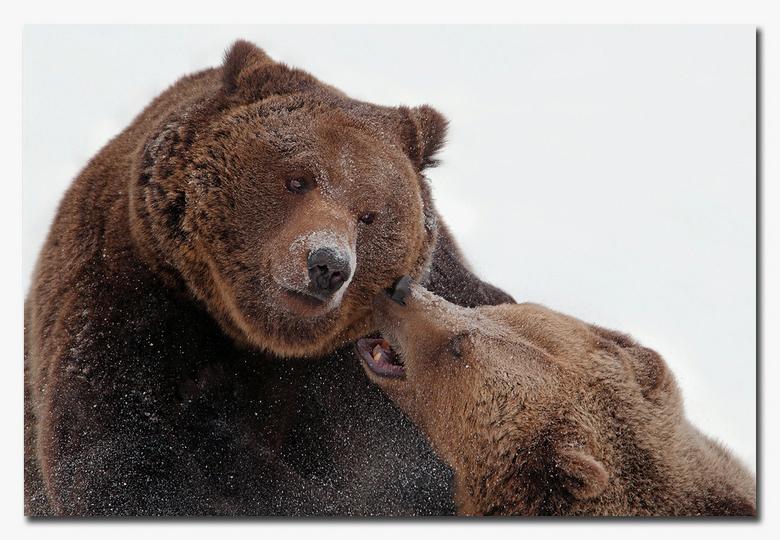 Pssssttttt.........., Even wat vertellen! - kom eens even met je oor, wil je wat vertellen..............<br /> <br /> Effies in het groot bekijken!<