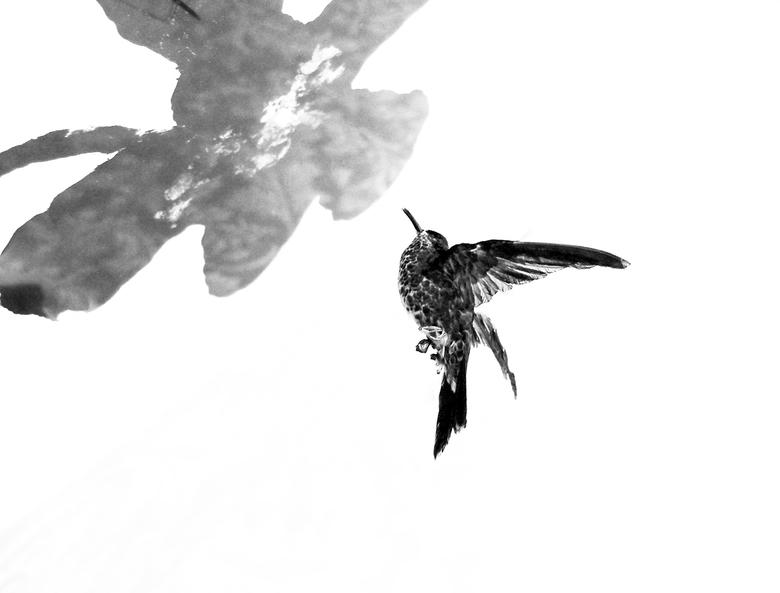 Nobody knows why the black bird visits a black flower -  groot zien  aub<br /> <br /> mijn idee bij het werk van Sinke en van Tongeren. Zij kunnen d
