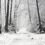 Winterwonderland(holterberg 10-12-2017)