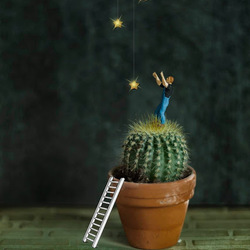 Reach for the stars,  even if you have to stand on a cactus.    - Susan Longacre -