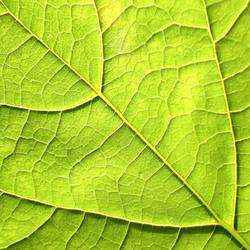 groen en nerf