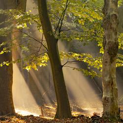 Zonneharpen in het bos