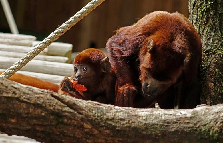 Lunchtijd - 'tja, dagje Apenheul dus scheep ikm jullie op met alleen maar apen. Het zijn wel mijn lievelings beesten wat fotograferen betreft. Fi