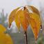 Herfstbladeren in de mist