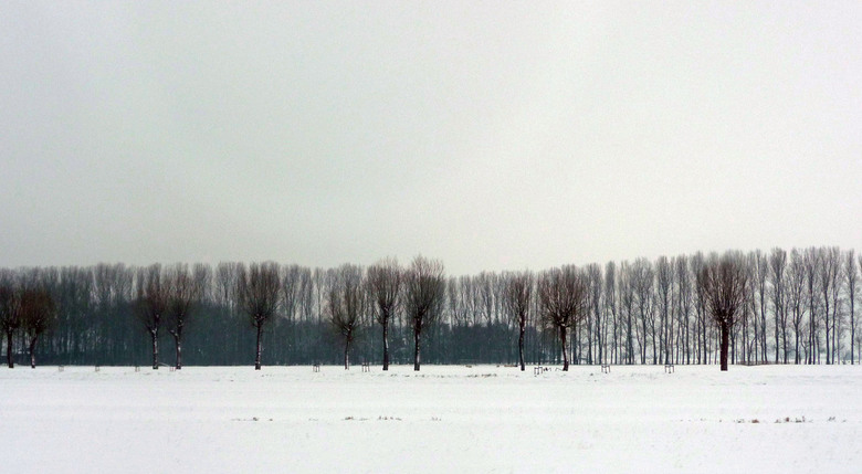 Winterland - ...