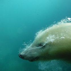 Polar bubbles