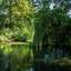 Utrecht-Julianapark Boom met takken in het water_2300