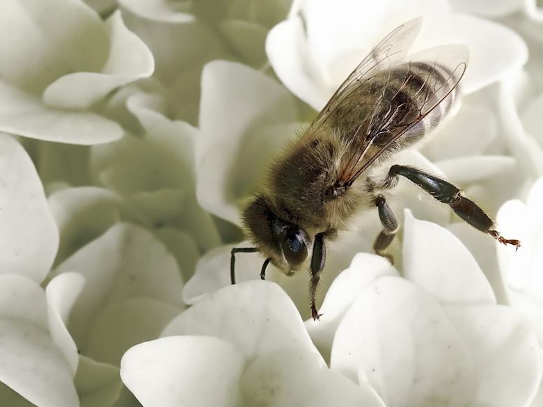 Maya de behangerij, voor al uw honing en behangklussen? What's in a name? - Maya de behangerij, voor al uw honing en behangklussen? What's in a n