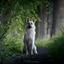 Nouk in het donkere bos