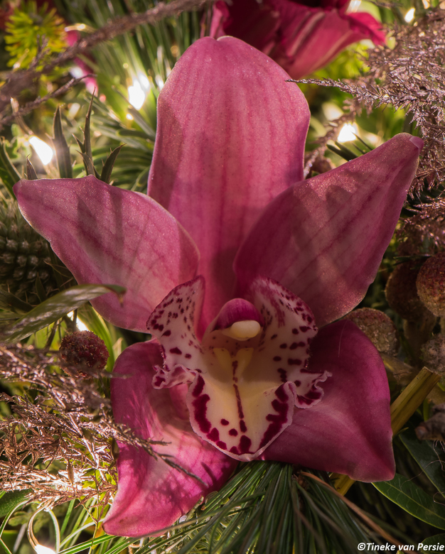 Orchidee in kerstsfeer