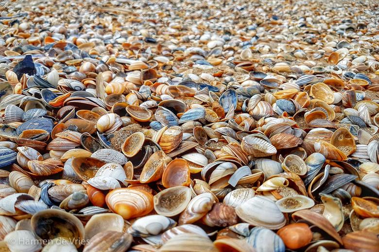 Schelpen - Lopend over het strand stuitte ik opeens op een enorme hoeveelheid schelpen die heel plaatselijk aangespoeld bleken.<br /> Met de foto wil