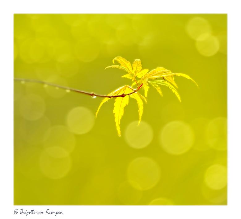 Fresh Autumn