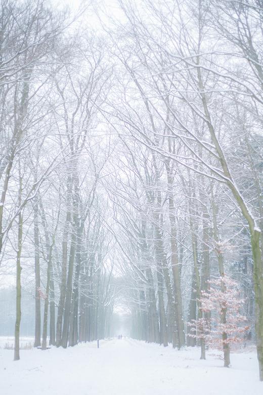 Magisch wit - Het heeft in het oosten ook gesneeuwd. Weliswaar niet zoveel als in het westen van het land, maar alles ziet er toch wel wit uit.<br />