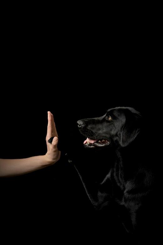 Best friend - Trouwe viervoeter, black beauty ❤️