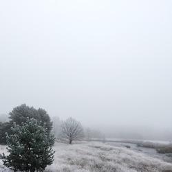 Winters Stilleven