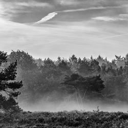 Mist op Wilde Kamp