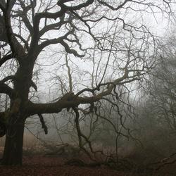 Mist in het Broek