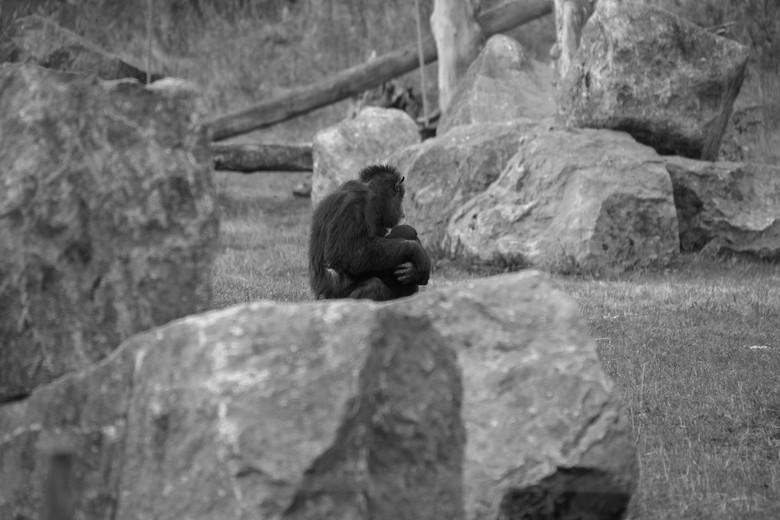 moeder aap en baby aap
