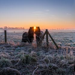 Nieuwsgierige paarden tijdens een mooie zonsopgang