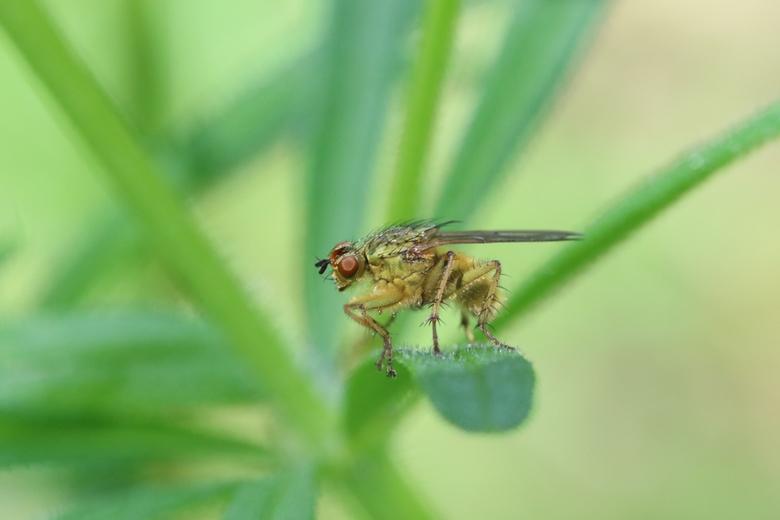 macro insect - Deze bleef net lang genoeg zitten.