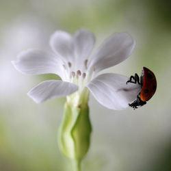 Hangend aan een bloemetje