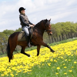 paard-en-bloemen-2