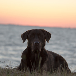 Benji met zonsondergang