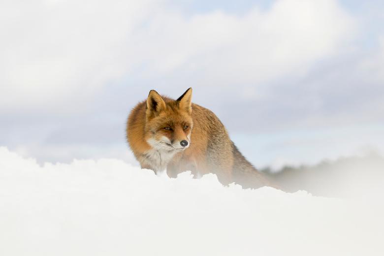 Heavenly fox.