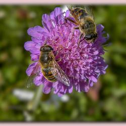 Van de bloemtjes en de bijtjes 1.jpg