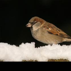Birdie on snow