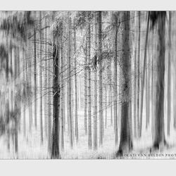 Black&White Forest