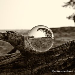Glazenbol op Kootwijkerzand
