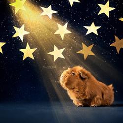 Pien Stargazing