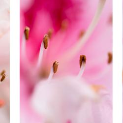 Drieluik bloemen