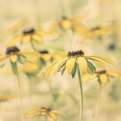 Sunny Flowers 2 uiteindelijk