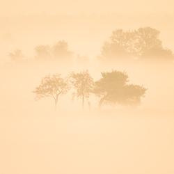 Bomen in de mist 2