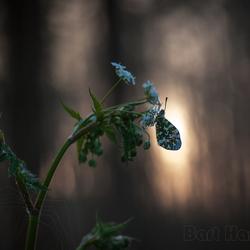 oranjetipje wordt wakker in een donker bos..