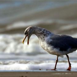 Lekker schreeuwen op het lege strand