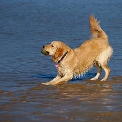 Bella op het strand