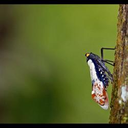 Wat voor insect???