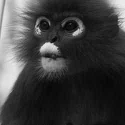 Gewoon, een aapje....