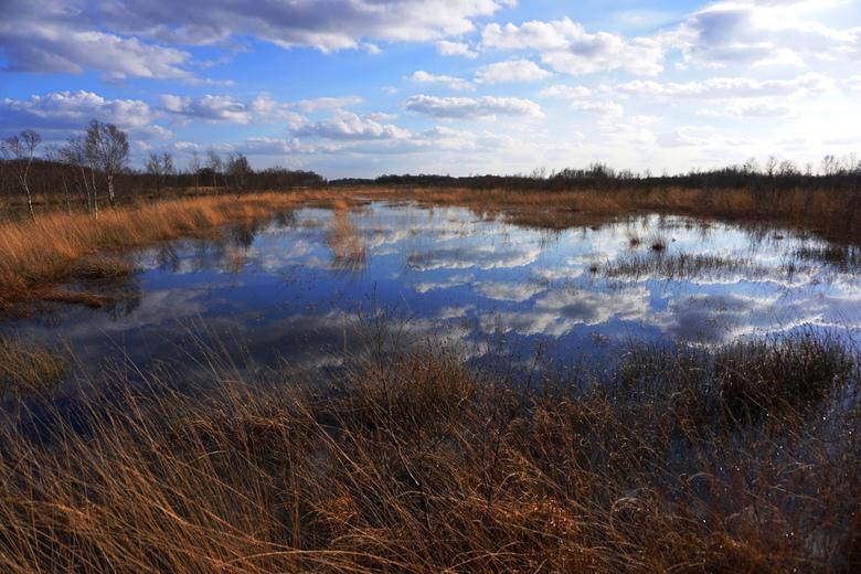 mirror - Het Bargerveen is een natuurgebied van Staatsbosbeheer in de gemeente Emmen, provincie Drenthe. Het is 2.100 hectare groot en bestaat grotend