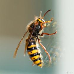 Hoornaar op het keukenraam
